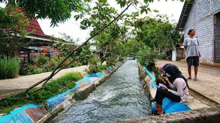 Saluran Irigasi di Desa Blimbing Kendal Jadi Obyek Wisata Air, Shila : Asyik Bisa Berenang