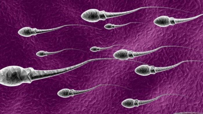 Peneliti China Temukan Sperma Mengandung Virus Corona, Amankah Berhubungan Intim?