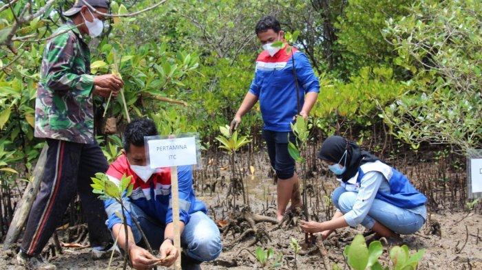 Pertamina Pulihkan Lahan Kritis di Pesisir Cilacap Melalui Program Konservasi Mangrove