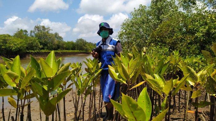 Selaras dengan sdg's pertamina pulihkan lahan kritis di pesisir cilacap melalui program konservasi mangrove