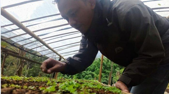 Petani Temanggung Semai Benih Tembakau Mandiri, Ponadi: Upaya Ciptakan Bibit Murni yang Terjangkau
