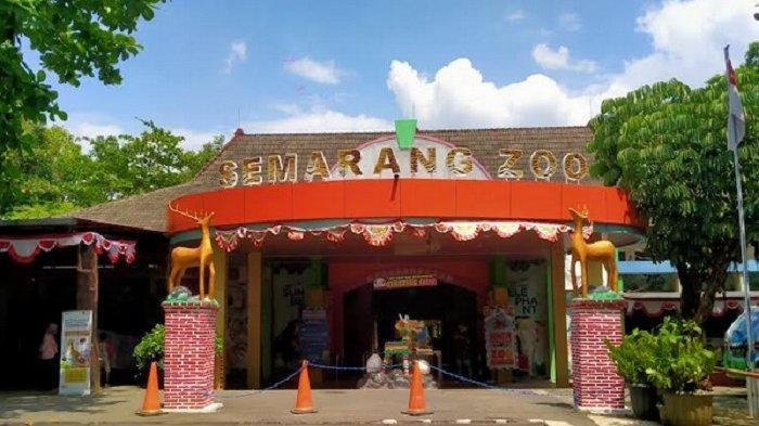 Pengunjung Semarang Zoo Masih Jauh dari Kapasitas