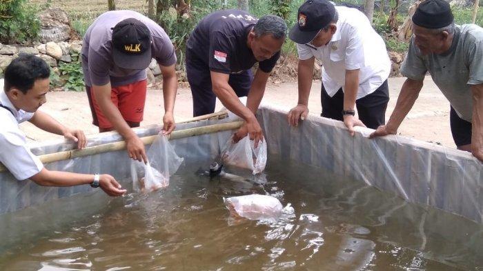 KKP Genjot Budidaya Ikan Kakap Putih untuk Pasar Ekspor
