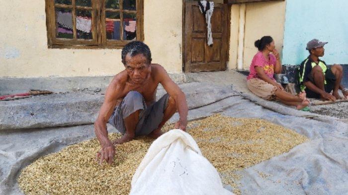Beberapa Petani di Tegal Alami Gagal Panen Karena Hal Ini