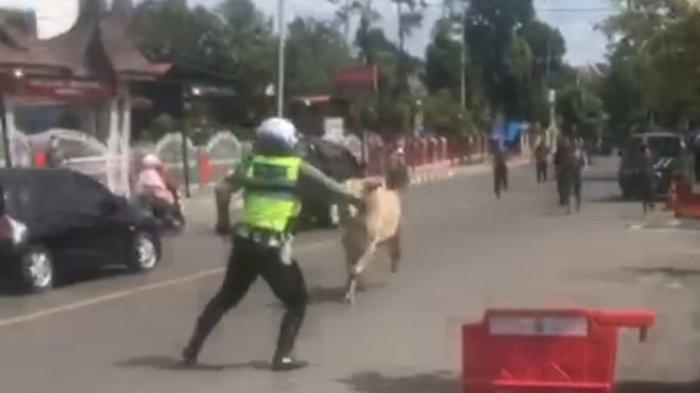 Semua Kendaraan Bisa Dihentikan di PPKM, Polisi Lalu Lintas Ini Gagal Hentikan Sapi, Videonya Viral