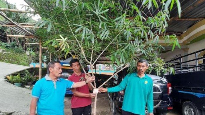 Jarak Towo dan Kopi Lawu Resmi Dipatenkan Milik Kabupaten Karanganyar