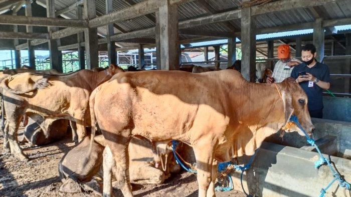 Hotline Semarang : Berapa Biaya Pemotongan Hewan Kurban di RPH