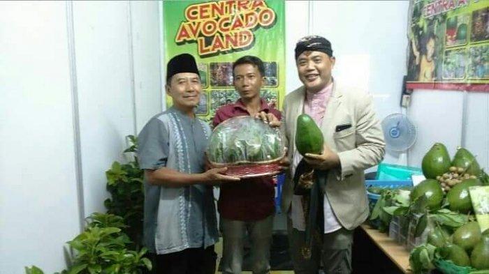 Pensiun Dari Perangkat Desa Sugiman Fokus Budidaya Alpukat Gading, Raih Penghargaan Tingkat Nasional