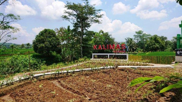 Pengembangan Desa Wisata di Pemalang Mulai Menggeliat