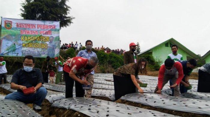Aziz Targetkan 3.750 Hektare Lahan untuk Budidaya Bawang Putih di Wonosobo