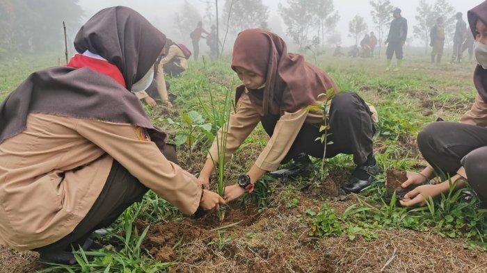 Ribuan Bibit Kacang Macadamia Ditanam di Dieng