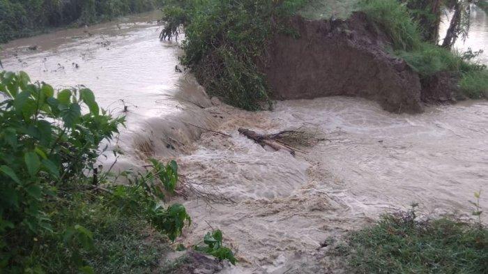 Tanggul Sungai Dolog Pilangsari Sayung Jebol, 5 Hektar Sawah Tergenang