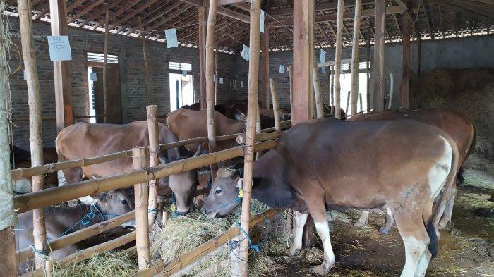 Banyak Ternak Sapi, Warga Banjarnegara Bisa Sulap Tlepong Jadi Biogas
