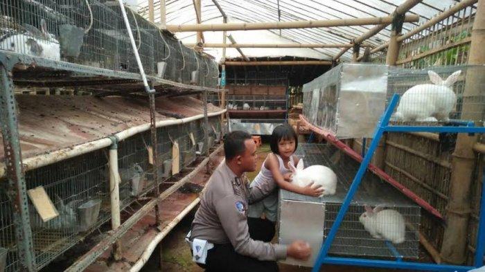 Mau Belajar Ternak Kelinci,  Silahkan Berguru pada Bripka Noor Sidiq Ini