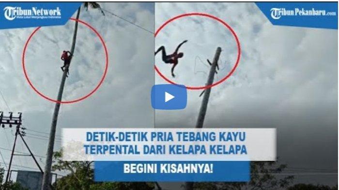 VIDEO Detik-detik Pria Penebang Kayu Selamat Meski Terpental dari Pohon Kelapa, Ini Kisahnya!