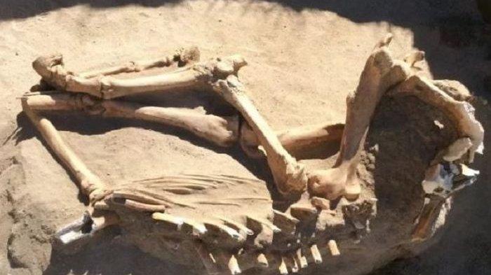 Menggali Belakang Rumah, Keluarga Ini Temukan Fosil Kuno Berumur 16.000 Tahun
