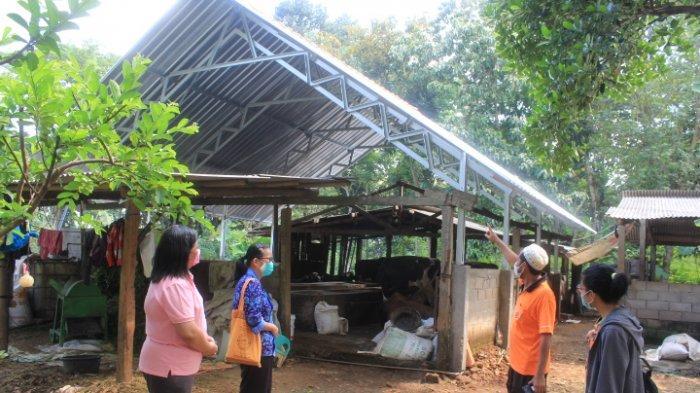 Tingkatkan Hasil Produksi Ternak Sapi, Tim Dosen Unika Renovasi Kandang Kelompok Tani di Jatirejo