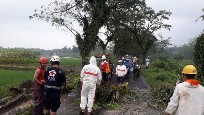 Hujan Lebat Disertai Angin Kencang, Pohon Tumbang Sempat Tutup Jalan Kajen-Kandangserang Pekalongan