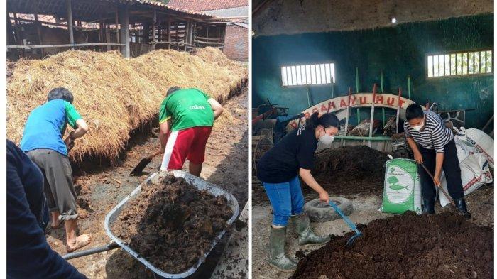 Tim PHP2D Unsoed Purwokerto Dampingi Karang Taruna Produksi Pupuk Organik