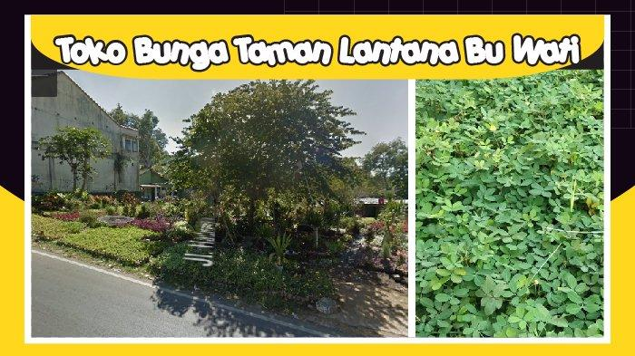 Toko Bunga Taman Lantana Bu Wati Sedia Bunga untuk Taman dan Jasa Perawatan