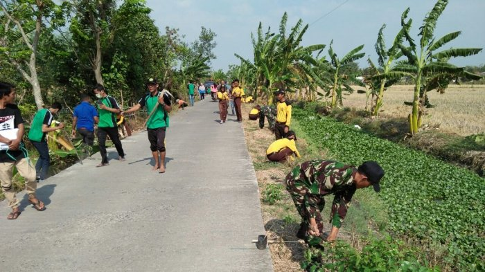 Warga Bonang Demak Tanam 1.000 Trembesi Bareng TNI, Ini Tujuannya