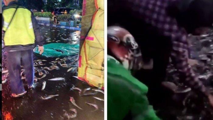 Viral Ribuan Ikan Lele Berserakan di Jalanan Serpong, Warga Berebut Ambil