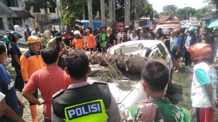 Pohon Tumbang Timpa Mobil dan Tembok Kantor di Semarang, Beruntung Tak Ada Korban Jiwa