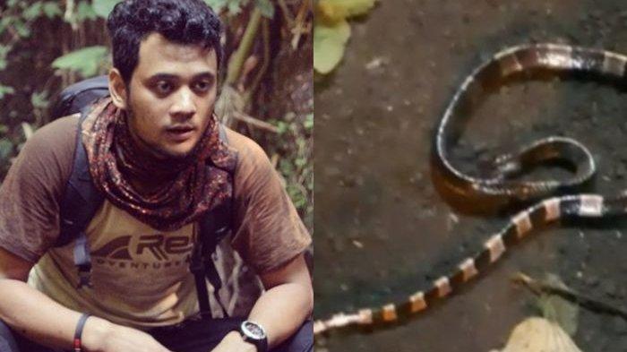 Pelihara King Cobra, Panji Petualang Belum Bolehkan Anaknya Bermain dengan Garaga