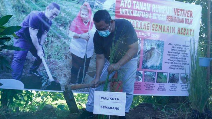 Alasan Hendi Masifkan Penanaman Rumput Vetiver di Kota Semarang