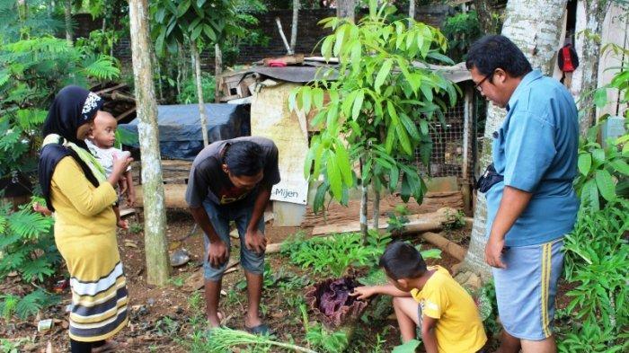 Sejak 2003, Bunga Bangkai Selalu Tumbuh Dekat Kandang Ayam di Mijen, 1 Minggu Warga Cium Baunya