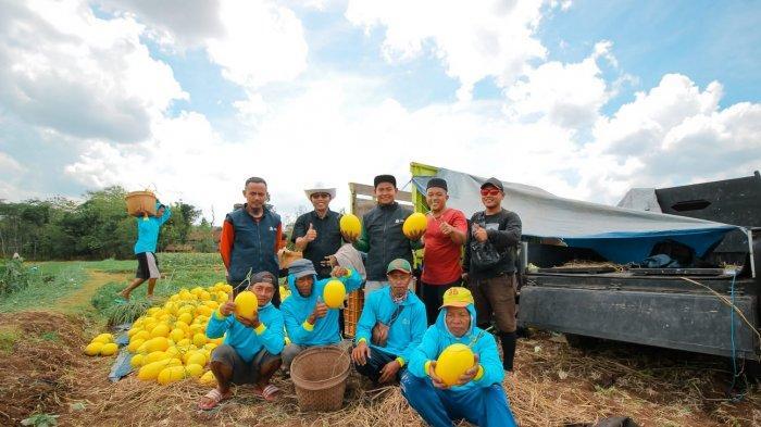 Melon Kinanti Bikin Kaya Raya Para Petani di Gunungkidul