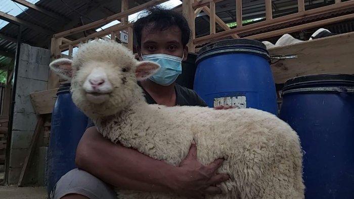 Peternakan domba yang ada di Desa Tlogopakis, Kecamatan Petungkriyono, Kabupaten Pekalongan, Jawa Tengah.