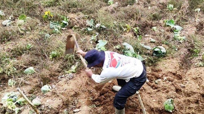 Kisah Petani di Dieng Sukses Kuliahkan Anaknya hingga Jadi Dokter