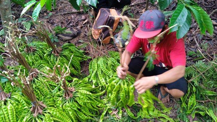 Kami Petani Ingin Belajar Ekspor Tanya ke Siapa?