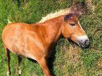 15-kuda-dimutilasi-di-perancis-sejak-awal-2020daily-mail.jpg