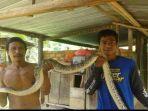 aksi-penangkapan-ular-piton-sepanjang-3-meter-yang-makan-belasan-ayam.jpg