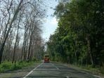 alas-jati-kecamatan-margasari-kabupaten-tegal_20180706_201325.jpg