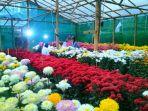 berbagai-warna-bunga-krisan-budidaya-kelompak-wanita-tani-sri-tani-lestari_20180519_223802.jpg