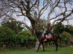 berwisata-naik-kuda-dimetro-stables-bandungan_20180502_101956.jpg