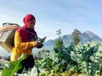 biduan-dangdut-novi-listiana-jadi-petani-brokoli-di-lereng-gunung-merbabu-boyolali.jpg