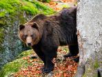 bocah-ini-dihukum-ditinggal-sendirian-di-hutan-yang-banyak-beruangnya-akhirnya-hilang_20160530_195603.jpg