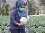 bupati-purbalingga-dyah-hayuning-pratiwi-meninjau-sekaligus-memanen-hasil-pertanian.jpg