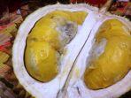 durian-malika_20171031_122837.jpg