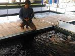 eko-sugito-membangun-kolam-ikan-koi-dengan-instalasi-yang-memadai.jpg