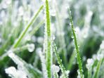 embun-upas-di-dieng-saat-suhu-0-derajat-celsius_20170905_111743.jpg