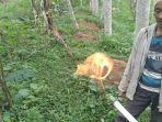 fenomena-semburan-api-dari-gas-alam-di-desa-bantar.jpg