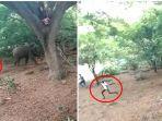 foto-tangkapan-layar-yeng-menunjukkan-para-pemuda-di-tirupur-india-menggoda-seekor-gajah-liar.jpg