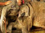 gajah-aceh_20170117_233323.jpg