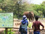 gajah-di-batang-dolphins-center.jpg