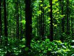 hutan-jati-blora-di-jawa-tengah_20161013_131305.jpg